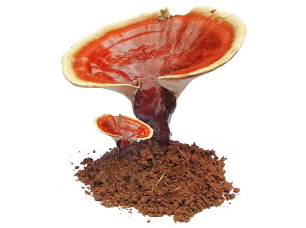 organic ganoderma mushrooms - organo gold, Skeleton