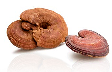 mushrooms_ganoderma_2